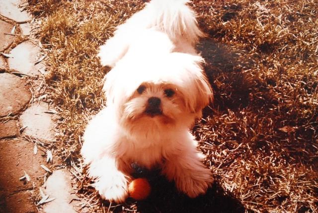 Annie get the ball