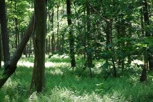 Ferns uphill
