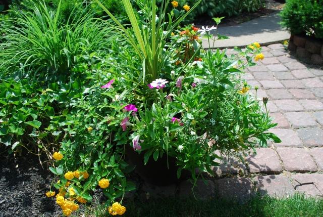 flowers 2015 big pot front left